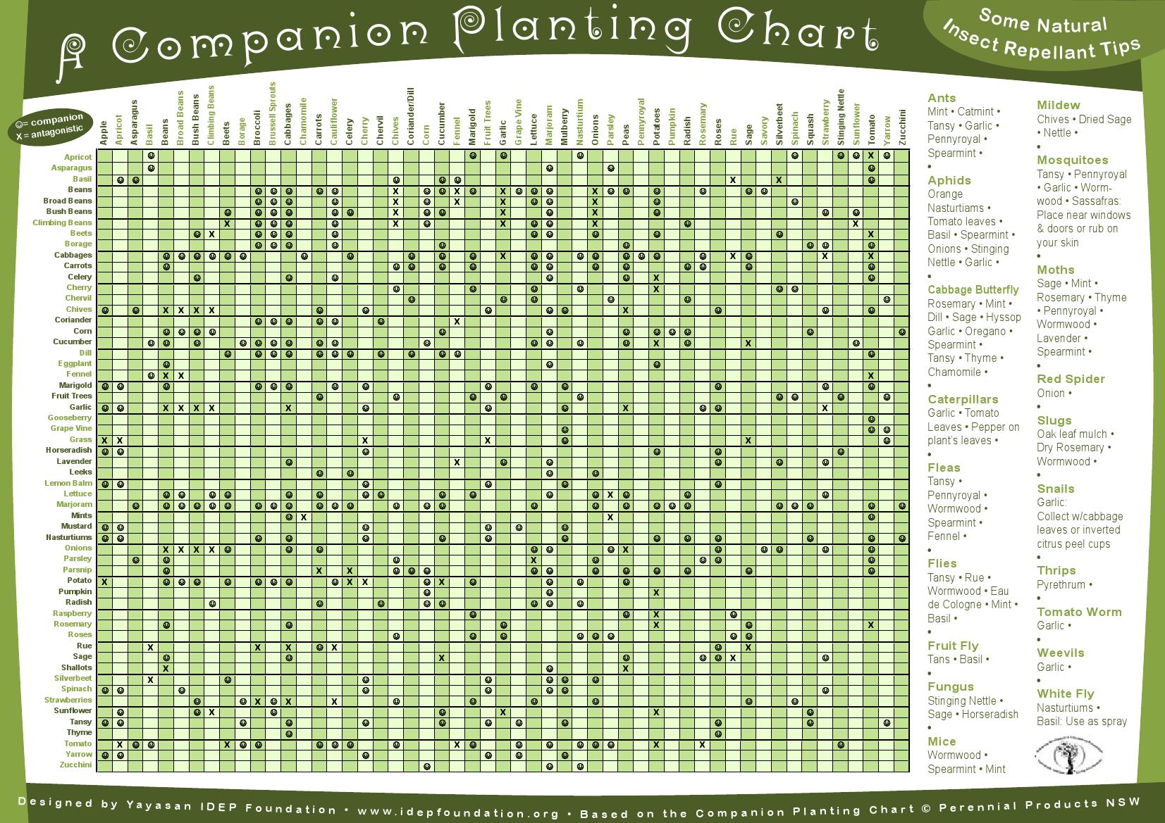 Companion Planting Chart Gardening Pinterest 640 x 480