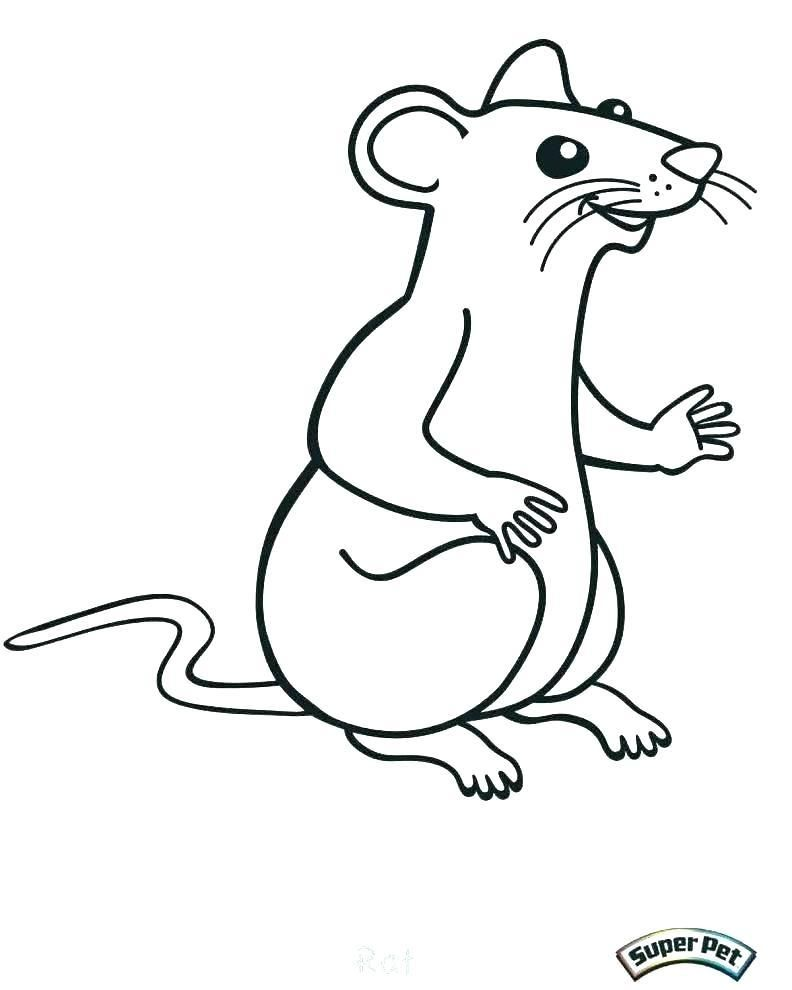 Beautiful Lab Rats Coloring Pages For Skunk Coloring Pages Flower Coloring Pages Rats Color
