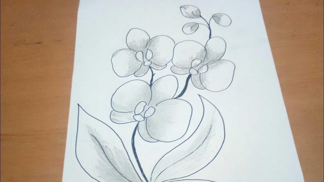 Pin Oleh Suandewicitra Di Yang Saya Simpan Sketsa Bunga Sketsa Gambar Bunga