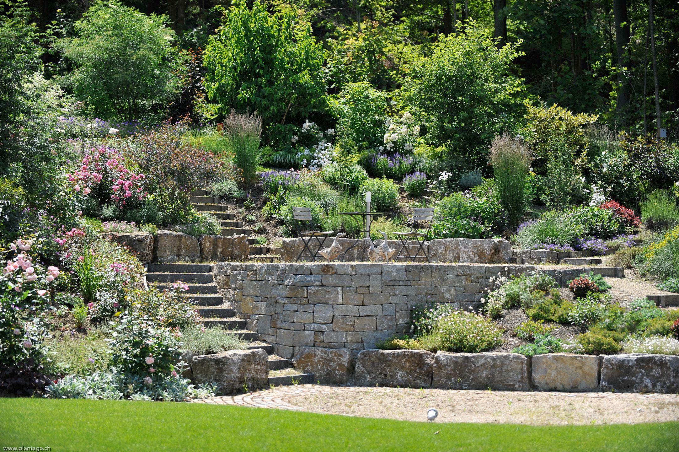 Garten plantago gartengestaltung baumknospen for Gartengestaltung verschiedene ebenen