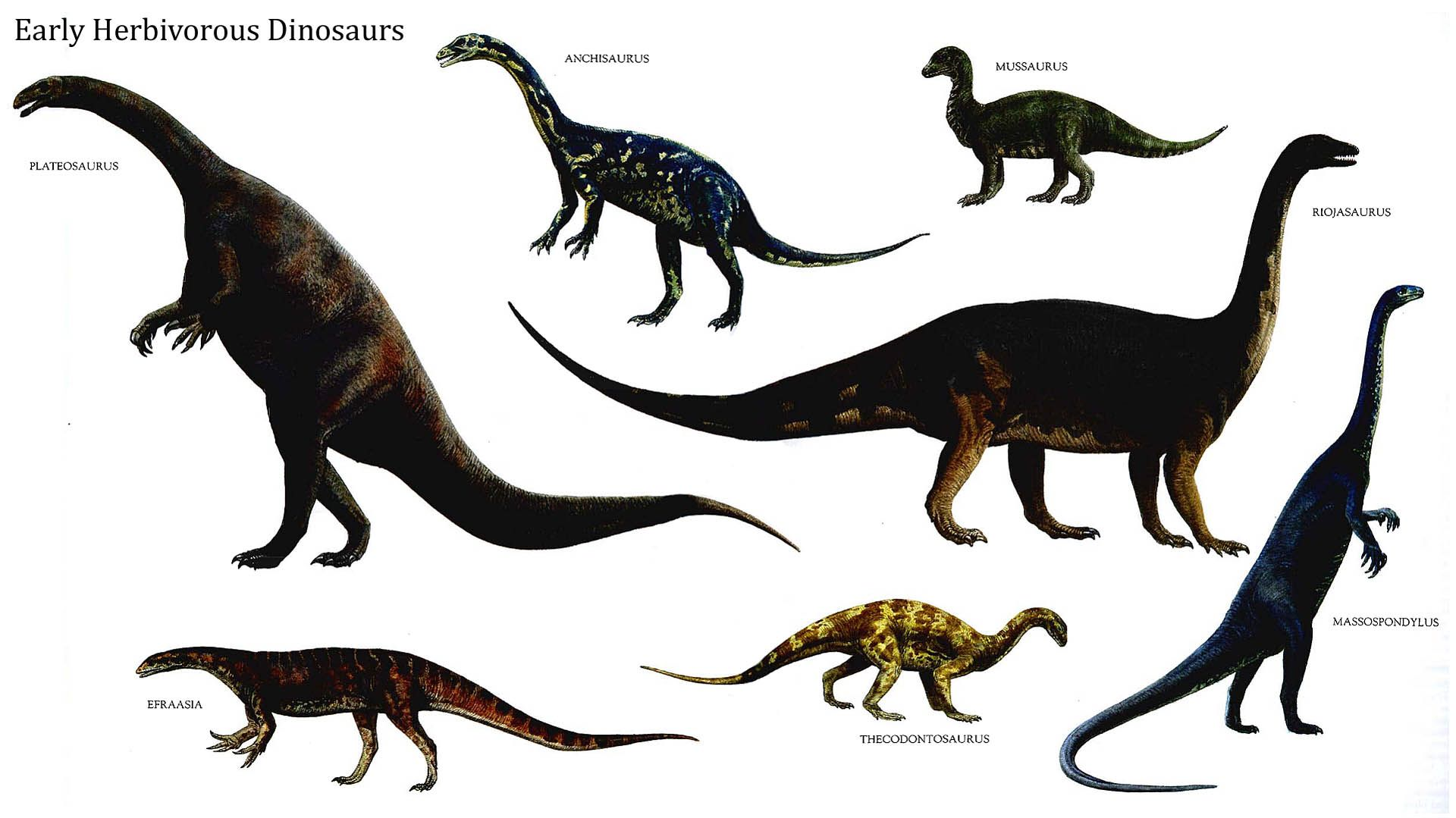 Image From Http Ayay Co Uk Backgrounds Dinosaurs Herbivore Early Herbivorous Dinosaurs Jpg Prehistoric Animals Dinosaur Pictures Dinosaur Images