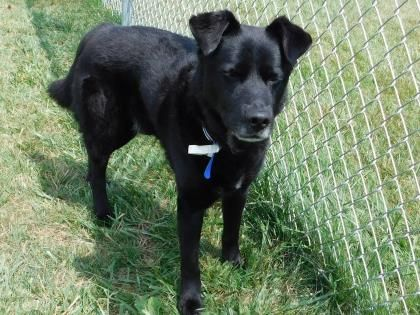 Status Unknown Conner Urgent Stark County Humane Society In