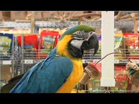 Choosing A Pet Bird Petsmart Youtube Budgies