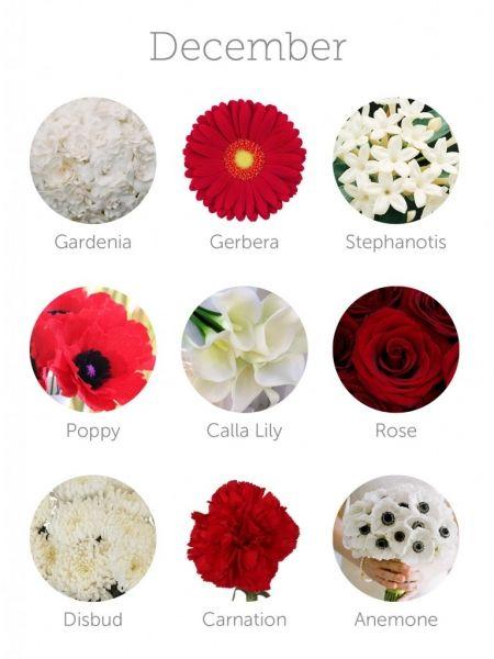 Flores De Diciembre Interesante Para Eventos En 2019