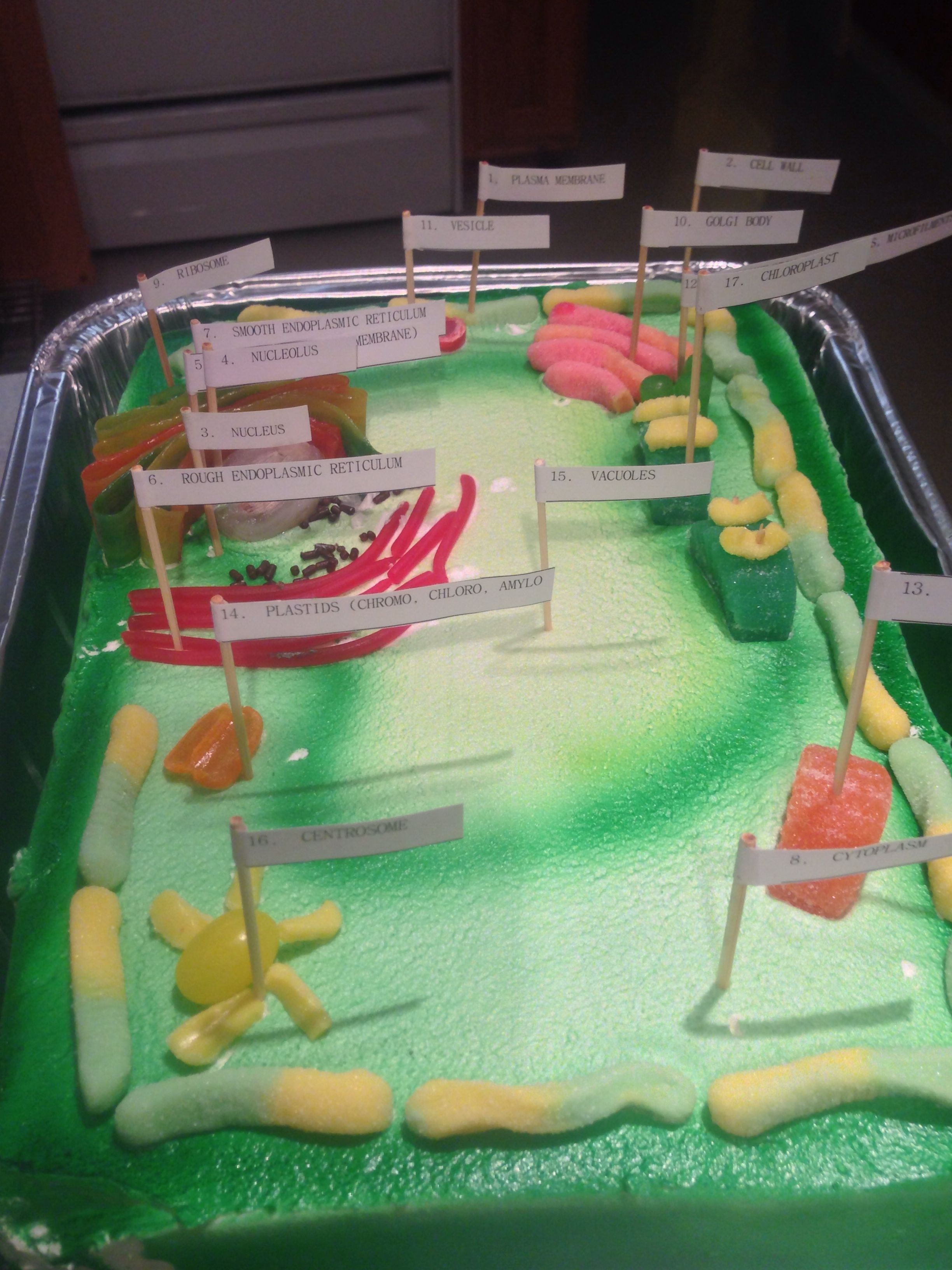 Plant Cell Cake 6th Grade Project