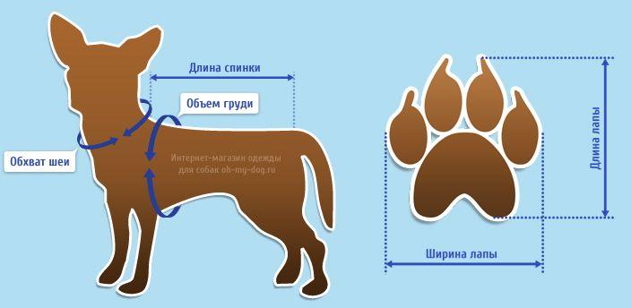 Косметика для собак 4 буквы