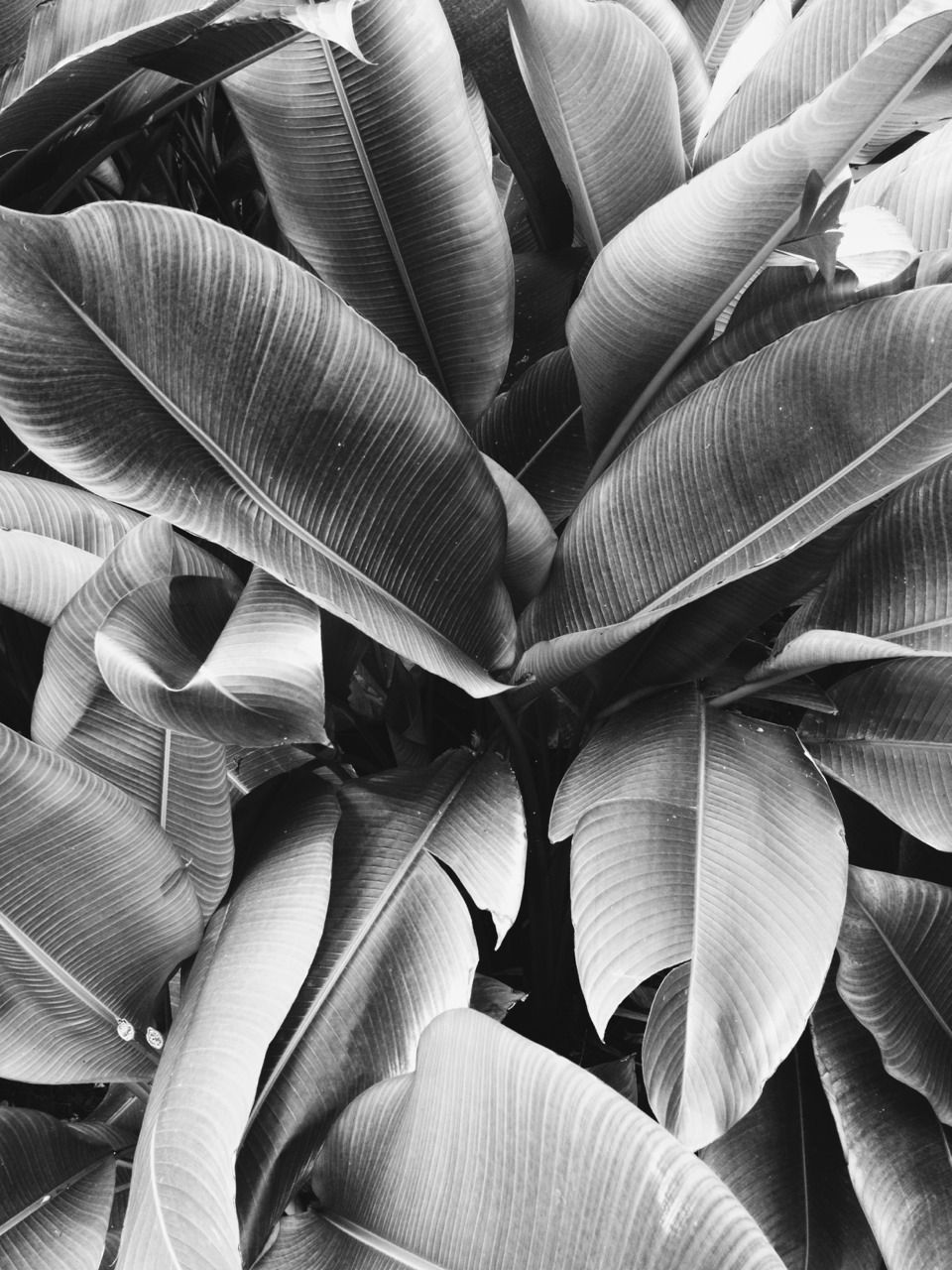 Beautiful black and white photo of leaves California