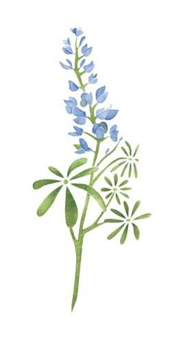 Texas Bluebonnet Flower Wall Stencil Sku 2987 By Designe