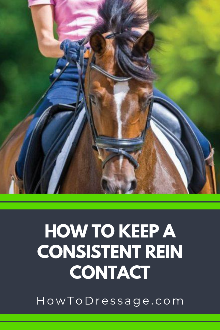 How To Keep A Consistent Rein Contact Horse Exercises Horse Training Exercises Horse Training