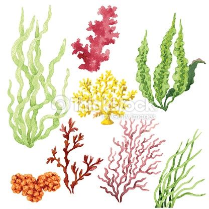 Set Of Watercolor Seaweed And Corals Isolated On White Acuarela De Coral Pintura Coral Arte Coral