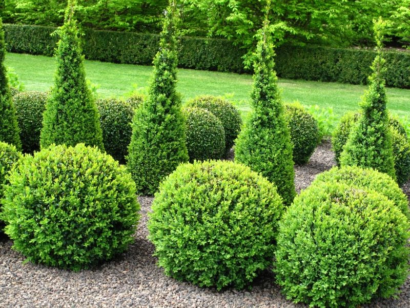 Once Considered A Staple Of Formal Gardens Topiaries Are Getting