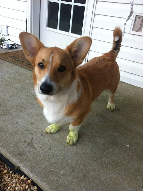 green paws.
