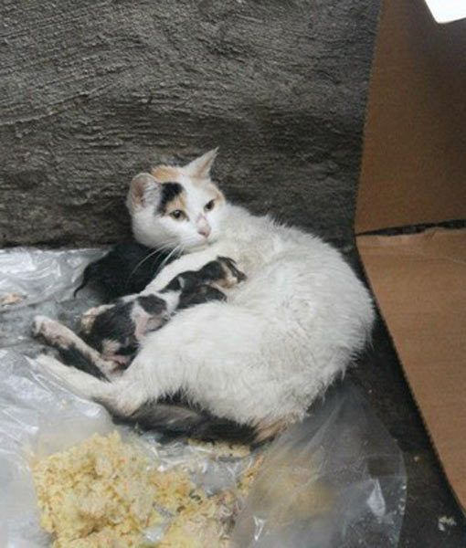 man rescues cat and kittens from sandy