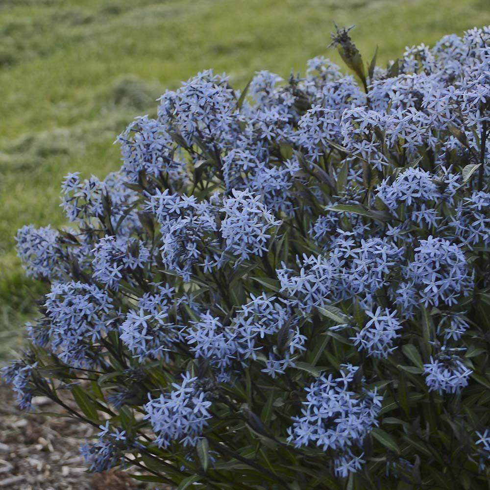 blue flower pots banjarnegara central java
