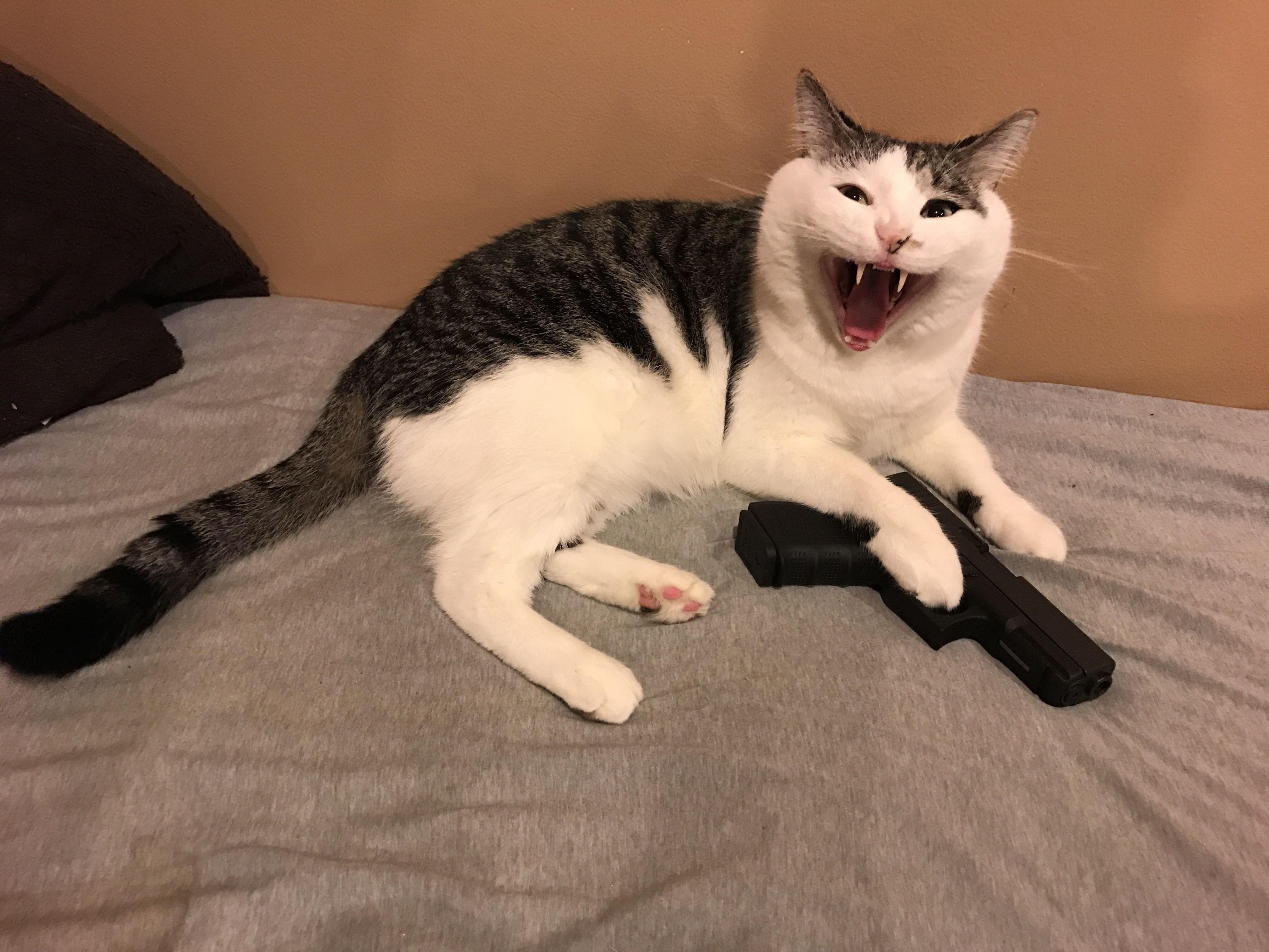i told him cats can't own guns and he was not happy Cute