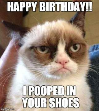 Pooped In Your Shoes Funny Happy Birthday Meme Grumpy Cat Humor Grumpy Cat Angry Cat