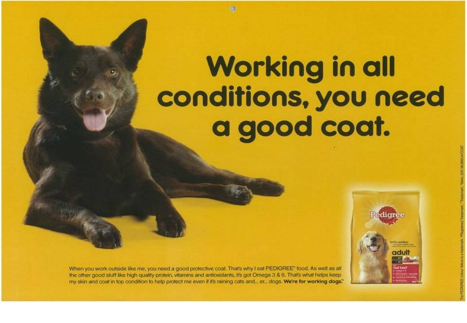 Fergus The Print Ad For Pal Pedigree The Ad Was Used In The