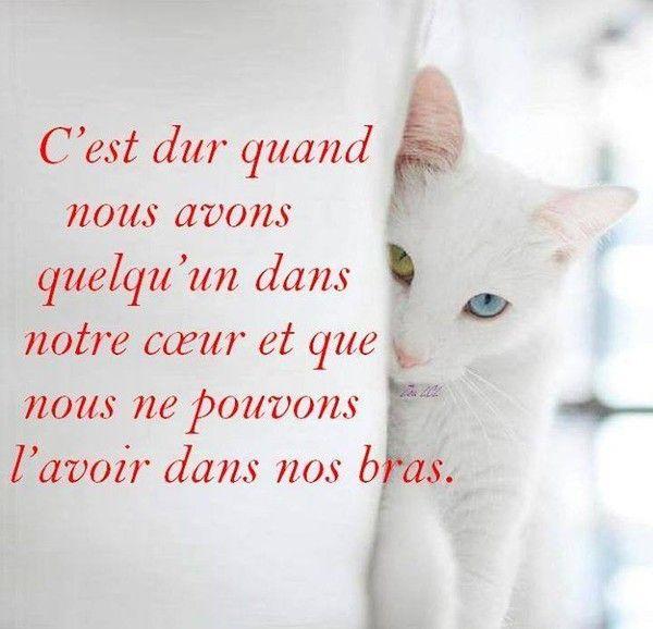 картинки по запросу Je Pense A Toi Citation Pour Nous Deux