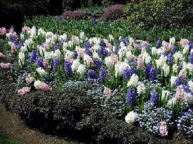 Shangrala's Butchart Gardens #butchartgardens Shangrala's Butchart Gardens #butchartgardens