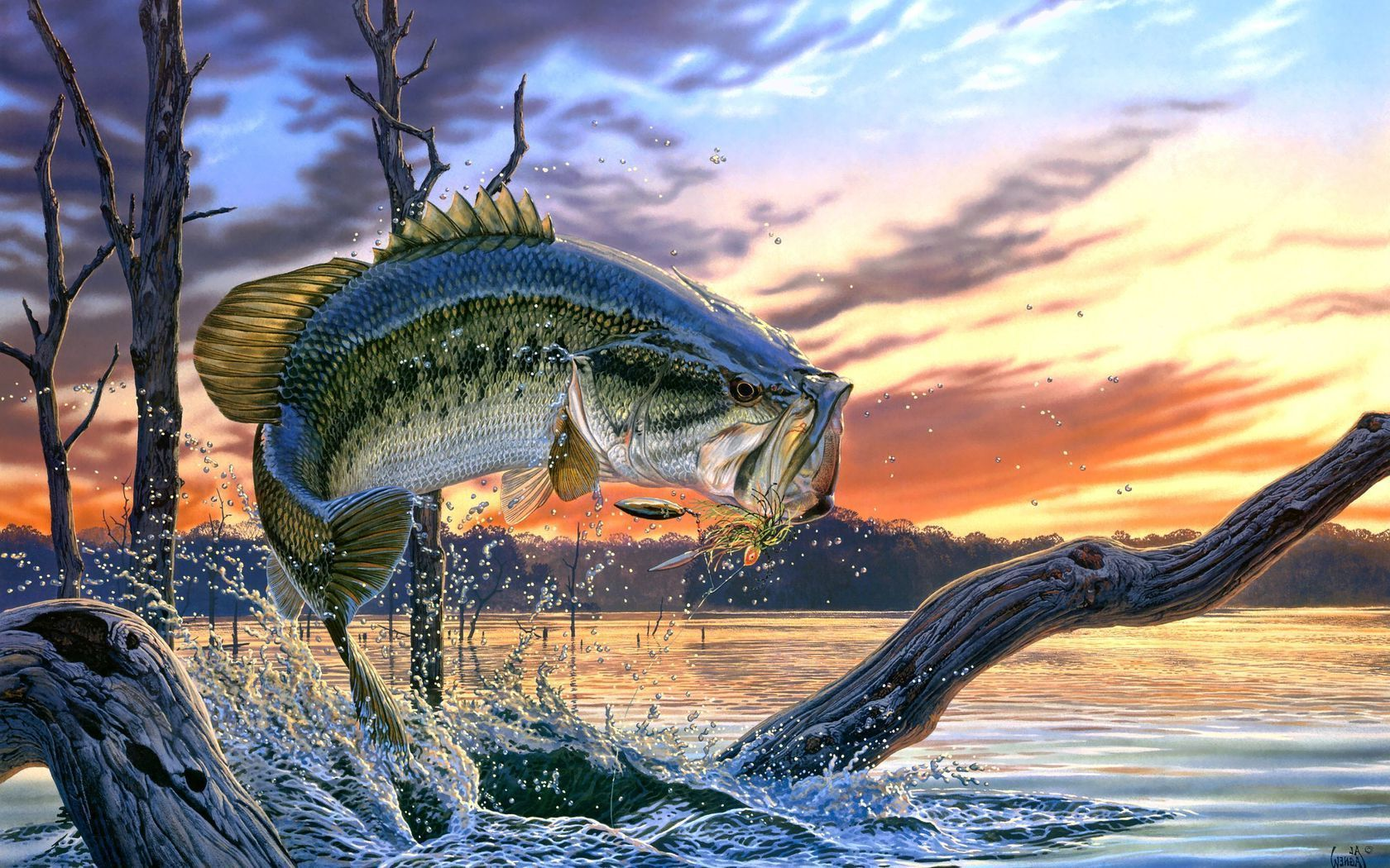 Bass Fishing Bass Fishing Wallpaper Backgrounds Wallpaper Cave Largemouth Bass Fishing Fish Wallpaper Fishing Pictures