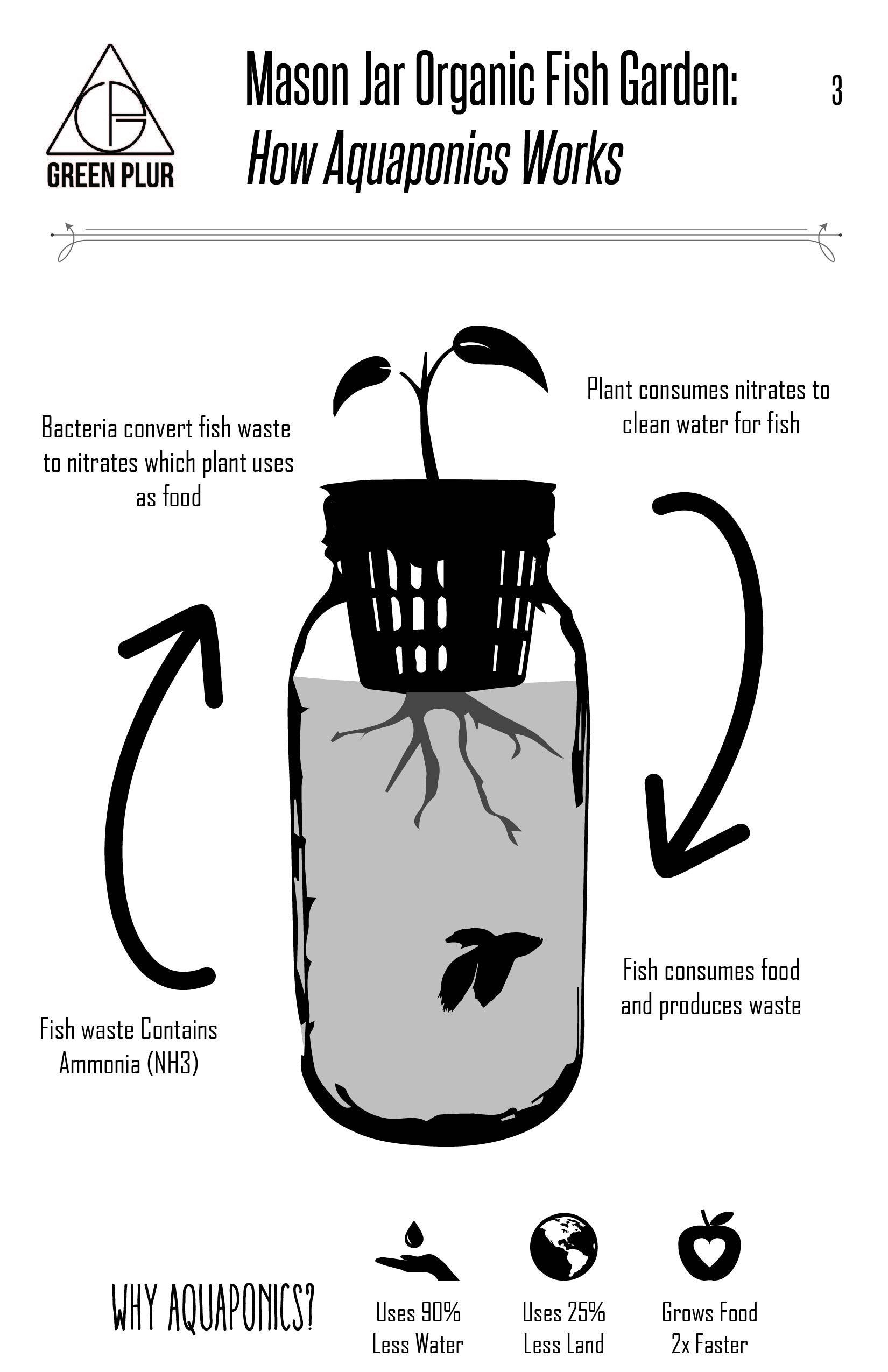 3 mason jar aquaponics kit build your own hydroponics on indoor herb garden diy wall mason jars id=40812