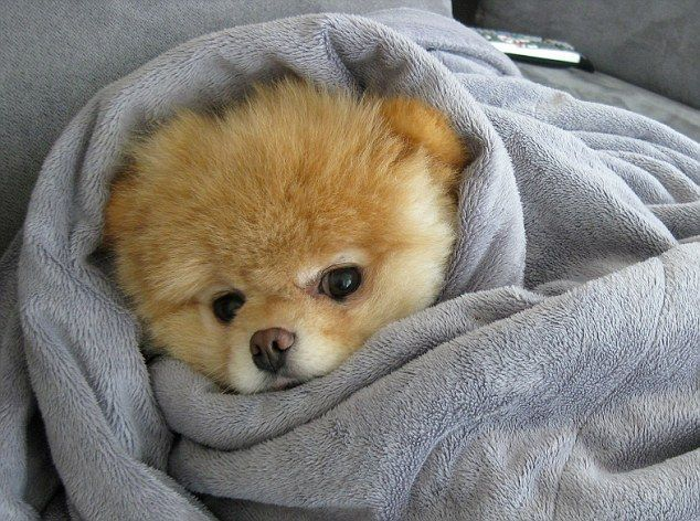 Image result for puppies hiding under blankets