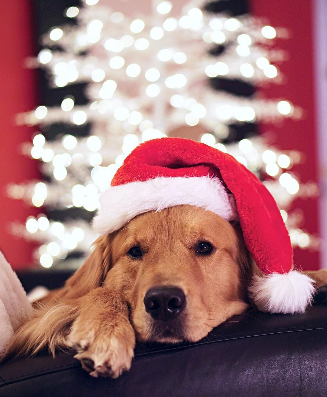Twas The Night Before Christmas Dog Christmas Pictures