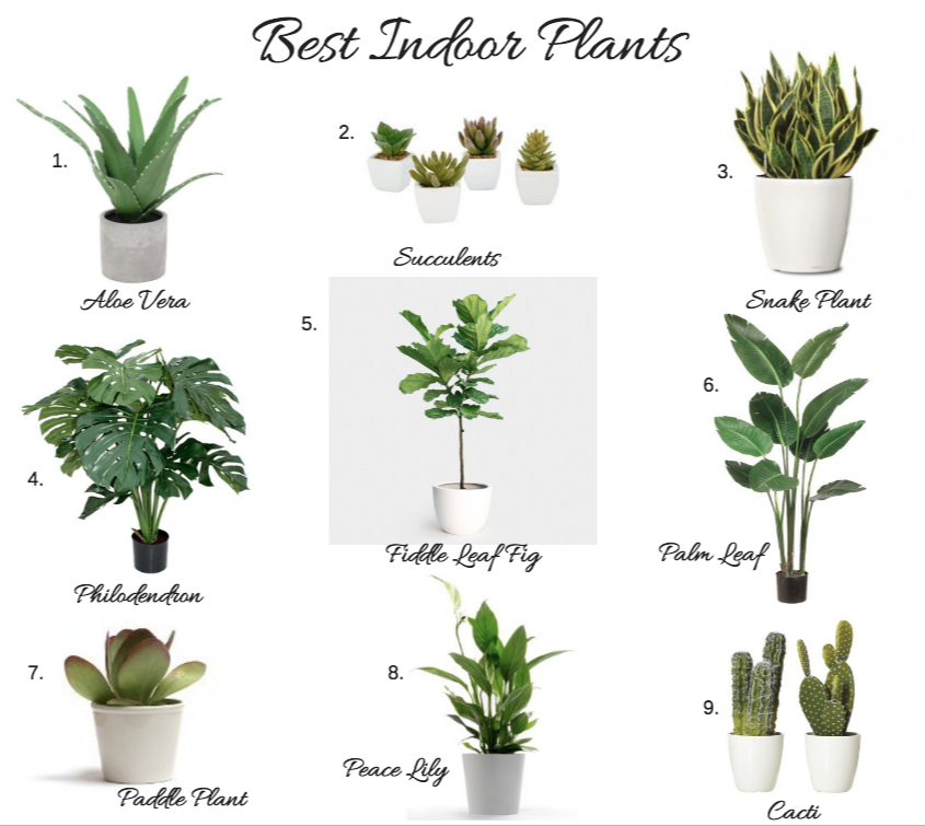 Top Indoor House Plants Png Best For Home
