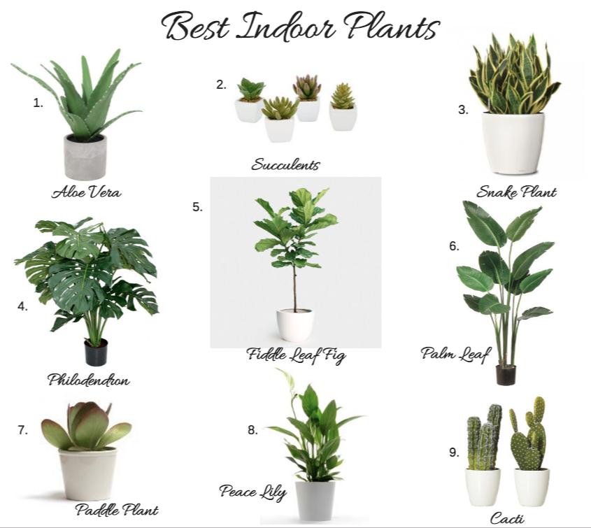 Best Indoor Plants Best Indoor Plants Indoor Plants Indoor
