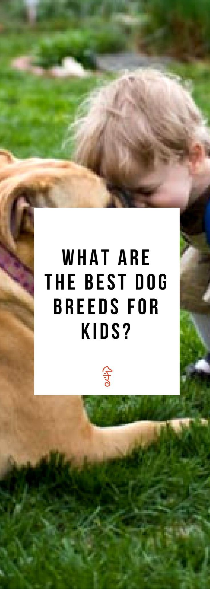 The Absolute Best Dog Breeds For Young Kids Best Dogs For Kids