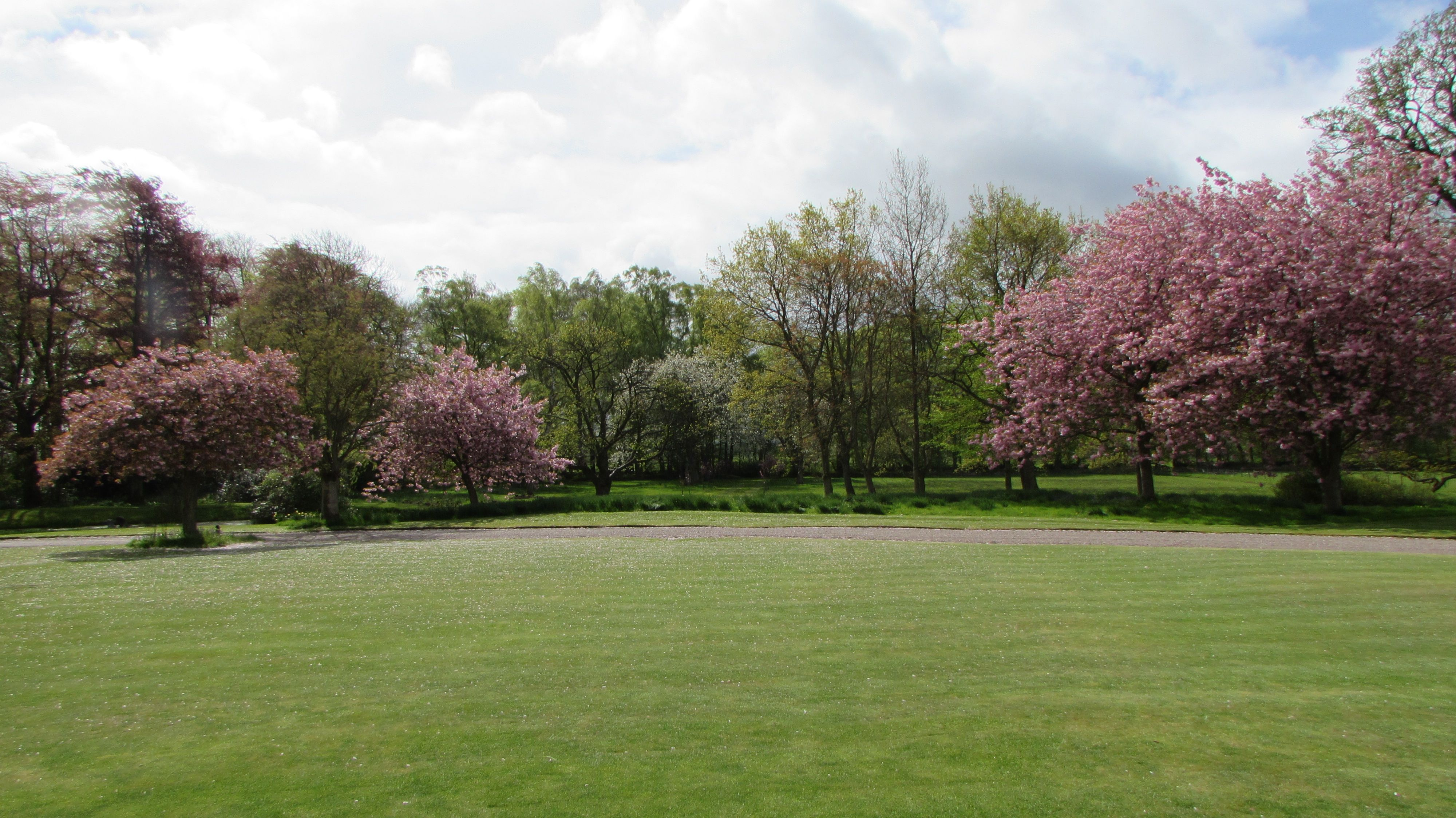 Beautiful Cherry blossoms on the Croquet lawn. #Myrescastle
