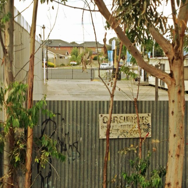 Gowrie station fence and eucalypts