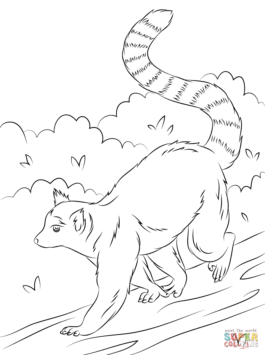 Cute Ring Tailed Lemur Coloring Page Free Printable Coloring Pages