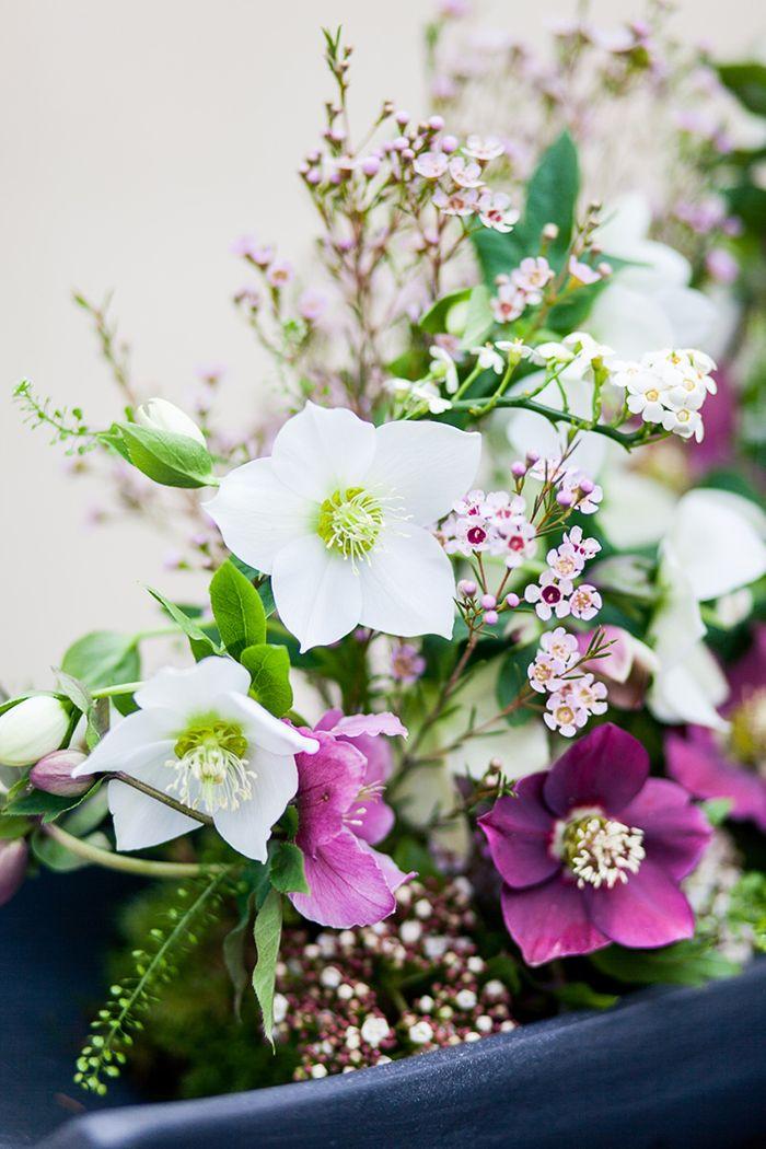 Blume Des Monats Januar Christrose Christrose Blumengestecke Blumen