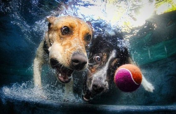 Seth Casteel's underwater dog photography. Hilarious and adorbs #dogs