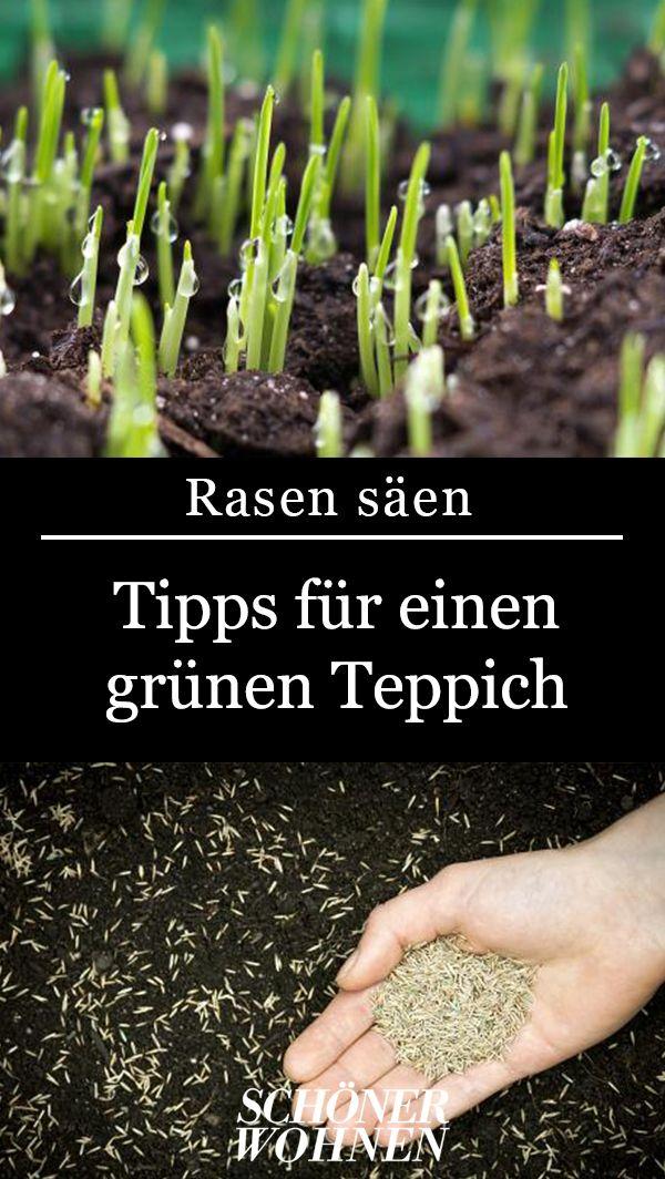 Rasen säen: So klappt's mit einem dichten Rasen