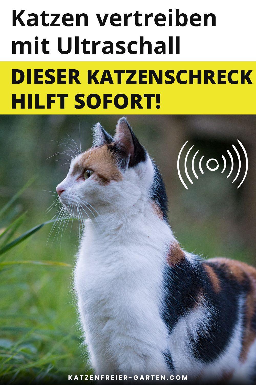 Katzenschreck Ultraschall In 2020 Katzen Schreck Ultraschall