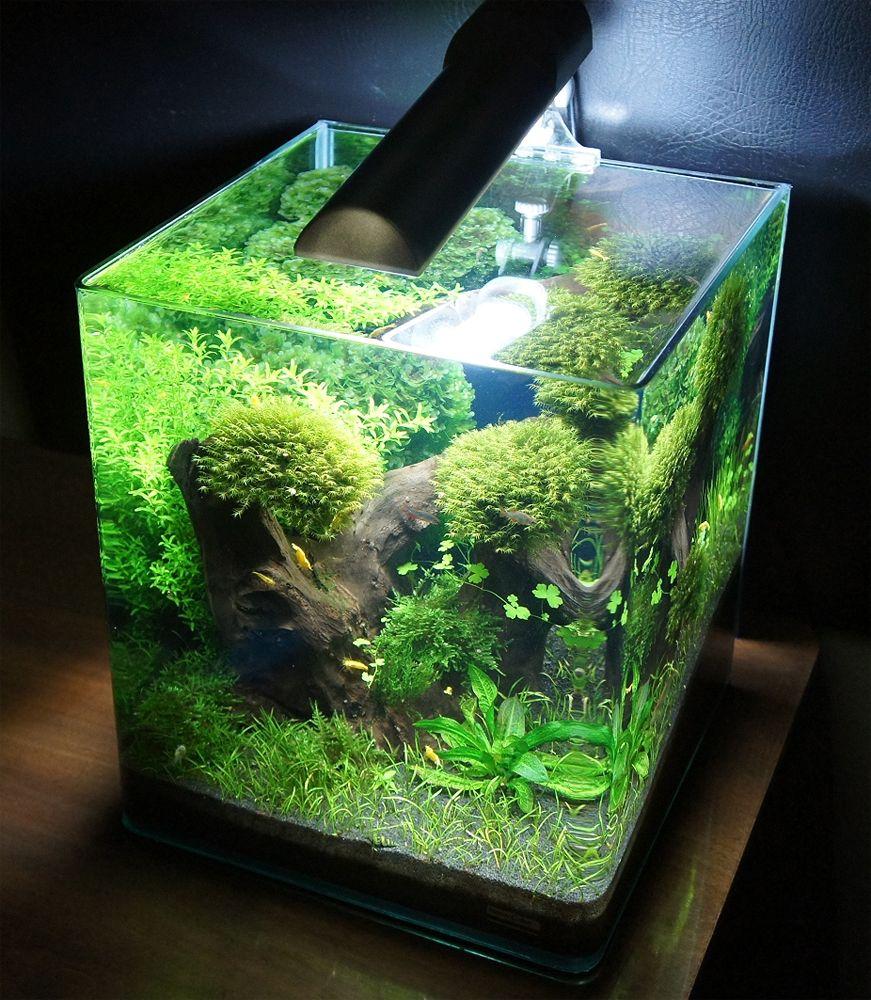 Aquarium planted tank aquascape aquarium pinterest - Peceras de diseno ...