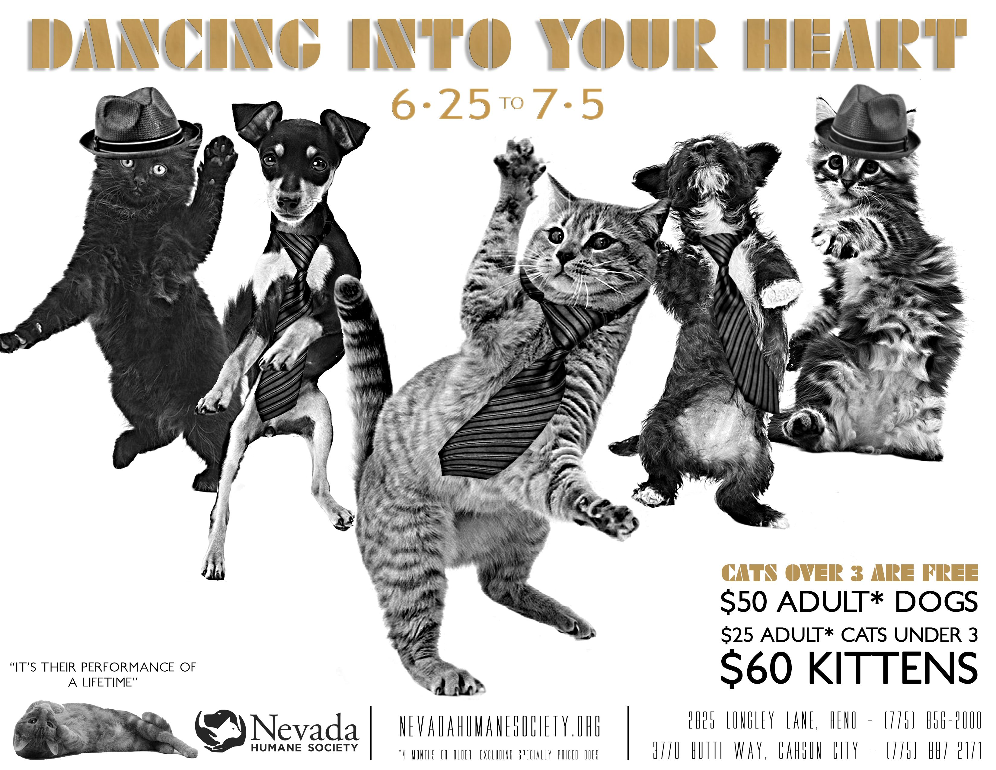 In Honor Of Magic Mike Xxl We Ve Got Dogs And Cats Dancing Into Your Hearts And Homes Will You Tell Your Friends And Dancing Cat Magic Mike Xxl Adult Dogs