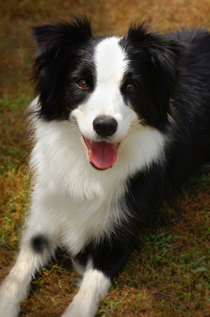 This Border Collie Was Extremely Calm Waiting For Her Next Dog Agility Run In Ruckersville Va Dogs Training Your Dog Border Collie