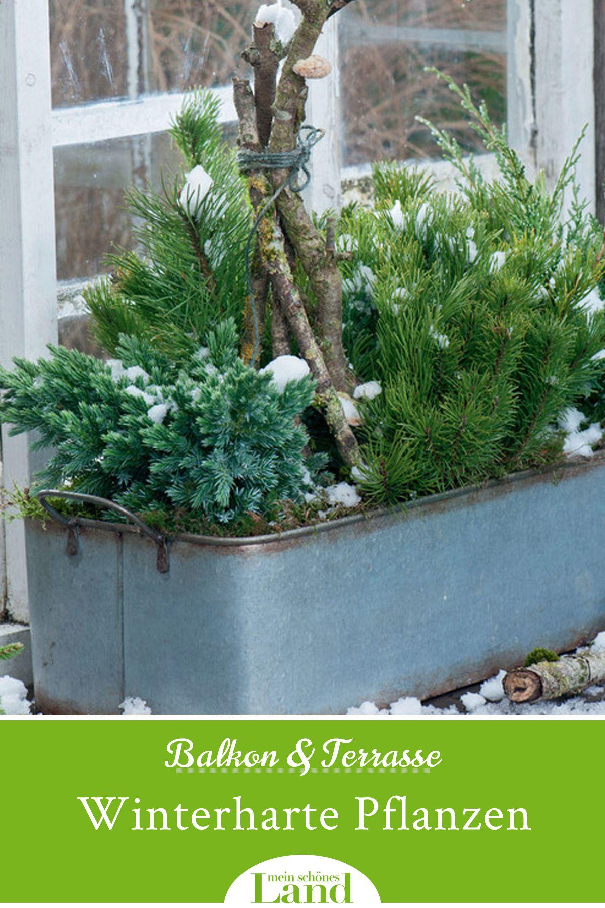 Winterharte Pflanzen Fur Balkon Und Terrasse Winterharte Pflanzen Fur Balkon Winterharte Pflanzen Pflanzen