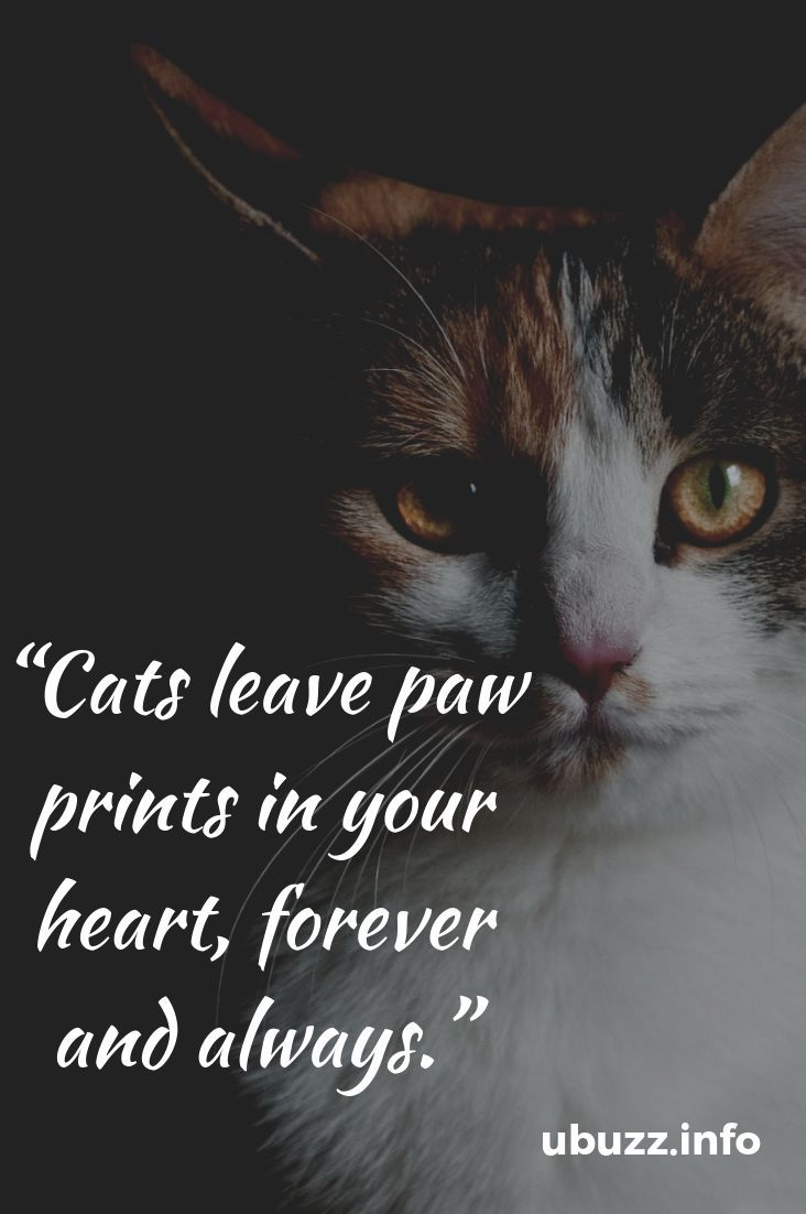 Insperational Cat Quotes Ever Kitten Quotes Cat Quotes Cat Quotes Funny