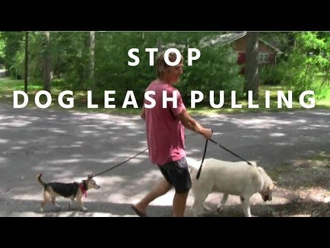 How To Train Your Dog Not To Pull Loose Lead Walking Video