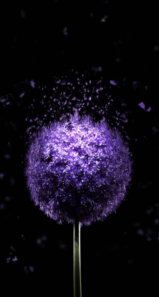 Iphone X Wallpaper Hd 1080p Black Purple Wallpaper Violet