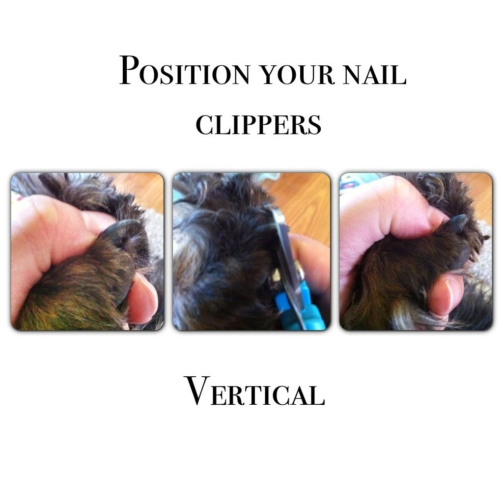 Grooming tips how to nail trimming black nails and ideas