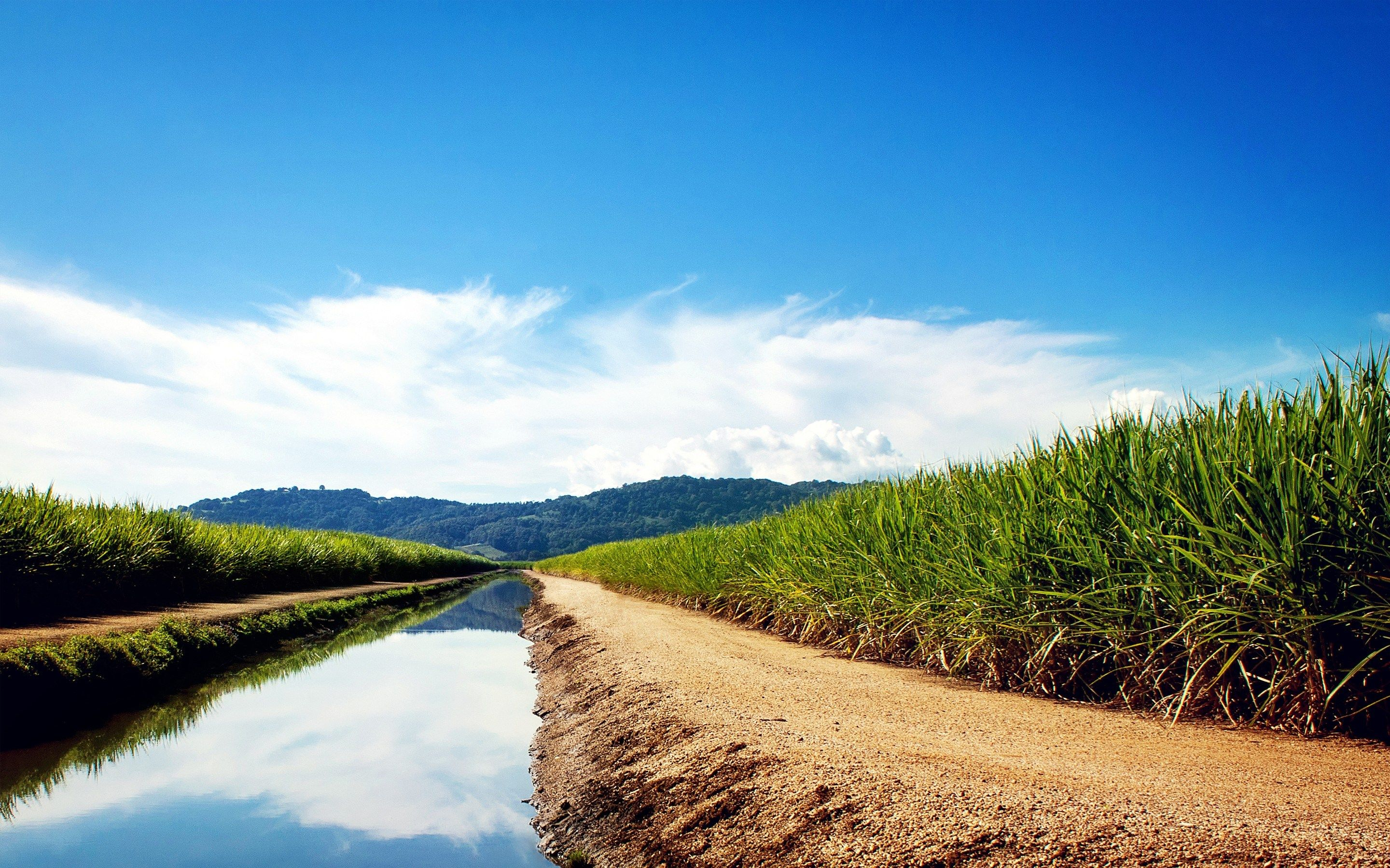 Sugarcane Fields High Definition Wallpapers
