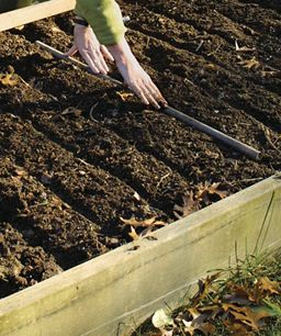 Grow Your Own Garlic - Fine Gardening Article