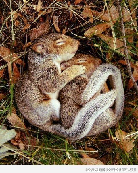 I'm gonna die of cuteness overdose....cuddling baby squirrelies!