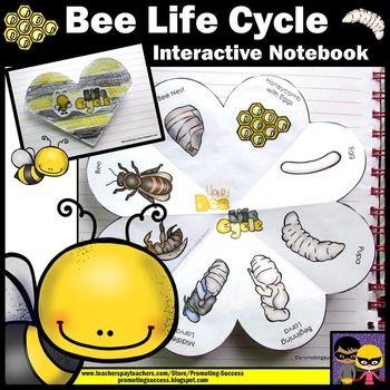 Life History of Honey Bee