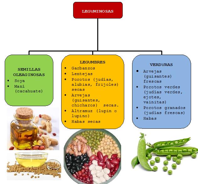 clasificacion de las leguminosas  Legumbres en 2019
